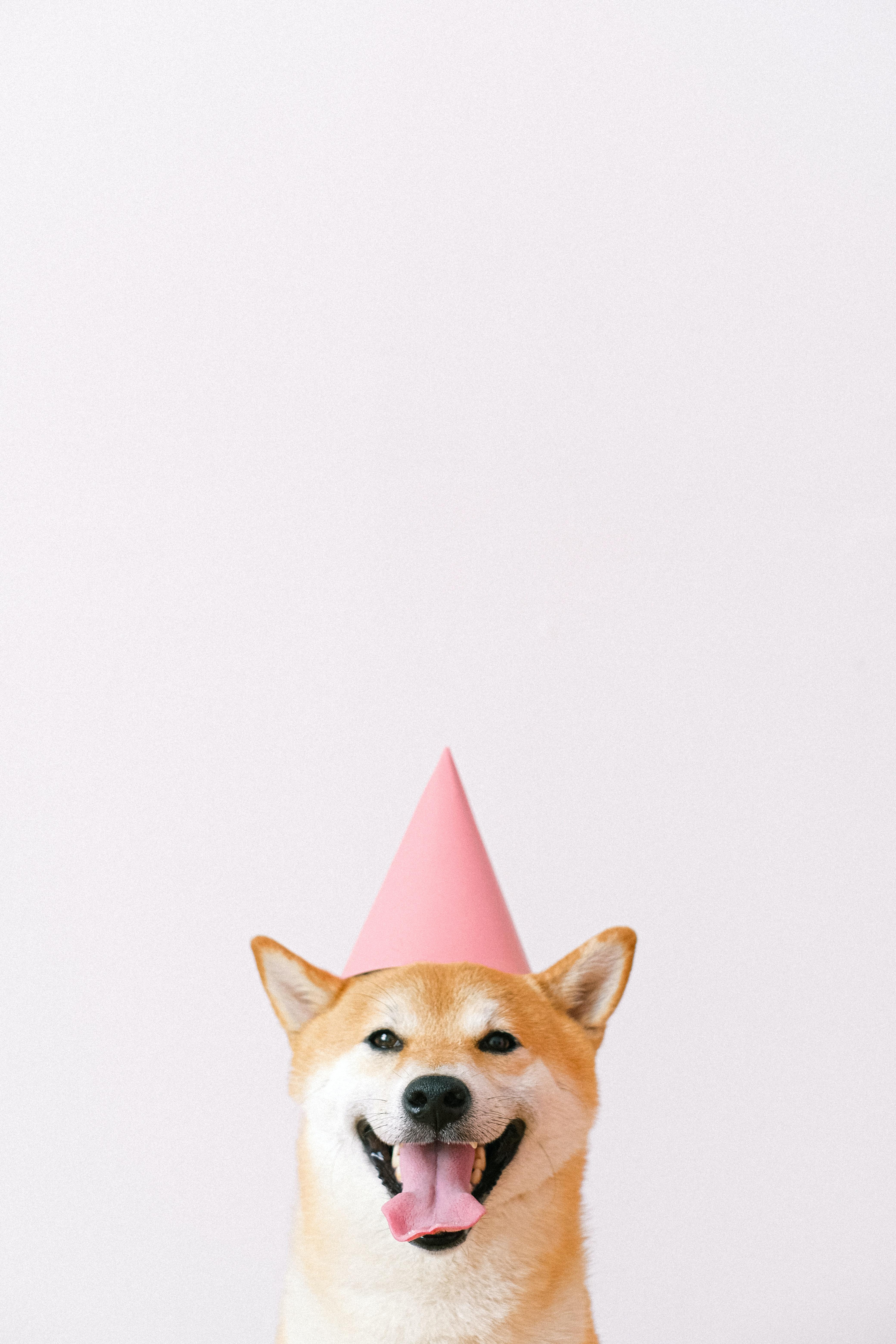 cute dog wearing a party hat 4k free wallpaper