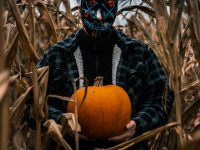 photo of man standing near corn plants