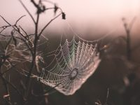 shallow focus of spider web