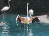 Birds 4K HD Free Wallpapers