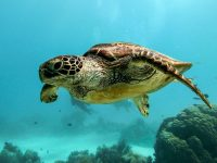 Turtle 4k free wallpapers